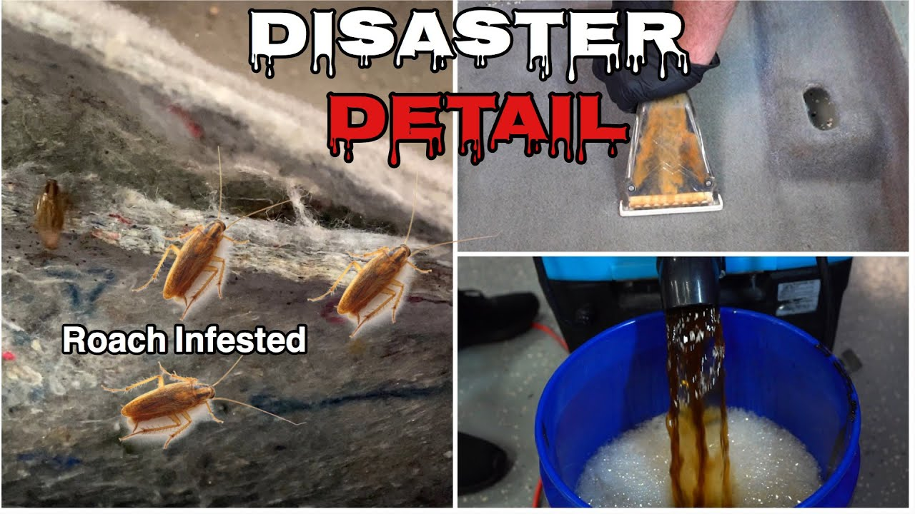Deep Cleaning A ROACH Infested Nightmare | Extreme Interior Extraction| Insane Detail Transformation