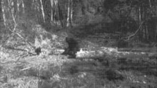 Bigfoot and Tammy, Witness of the unknown