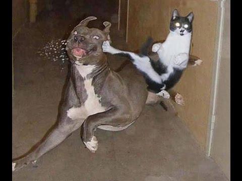 Ninja Cat Showings Kung Fu Skill | Funny Cats Compilation 20 min | Funny Cats Compilation 2015 New