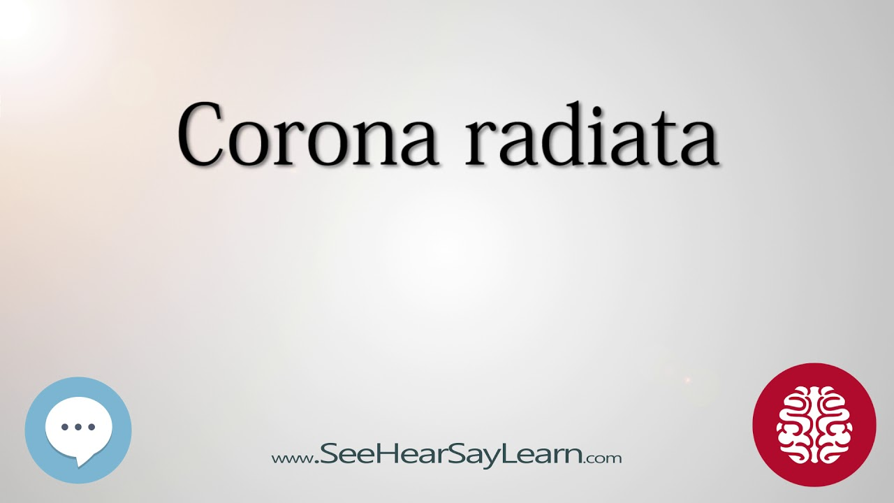 Corona radiata Anatomy of the Brain SeeHearSayLearn 🔊 - YouTube