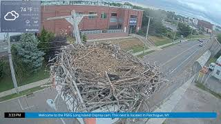 Preview of stream Osprey Cam - Patchogue, NY