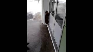 Голодная кошка лезет в солдатскую столовую