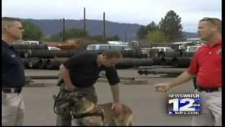 Medford Police Dogs Seek Certification