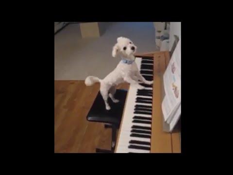 pets have got talent