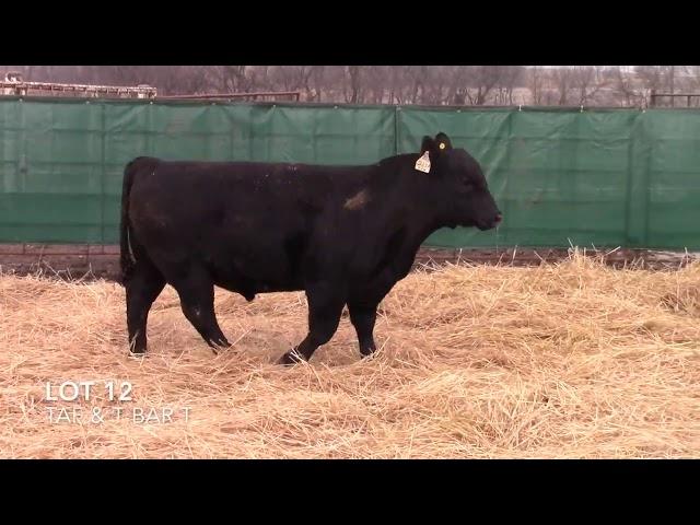 Taliaferro Angus \u0026 T Bar T Angus Ranch - 12