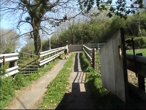 Dyfed Powys Police fail again