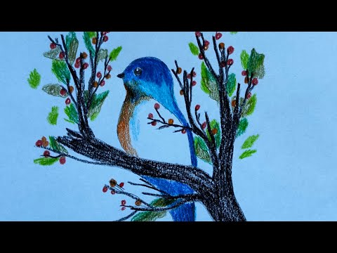 how-to-draw-beautiful-bird-with-pencil-color-step-by-step.-belajar