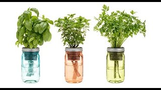 10 Herbs That Just Need Water - Indoor Water Plants