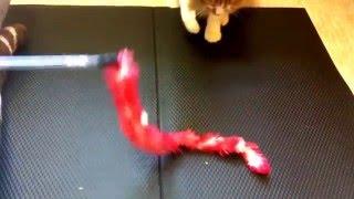 おもしろいドラチャン〜おもちゃVS猫