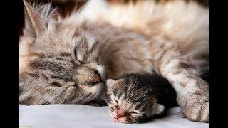 Что снится кошке? | Интересные факты