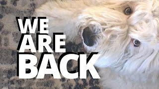 Old English Sheepdog Back from Break┃Ed&Mel