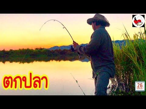 ตกปลาชิวๆ กับวิวธรรมชาติ ►Fishing lifestyle Ep.216