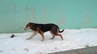 Реутов. промзона, собака идет вдоль забора и труб