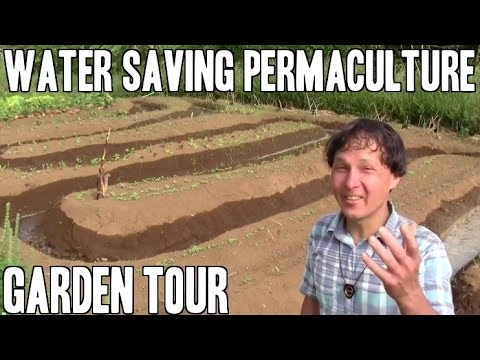 Water Saving Tropical Permaculture Garden Tour
