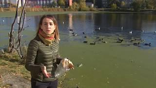 Озеро Кирпичка в Старом Кировске Омска вошло в список объектов благоустройства 2019 года