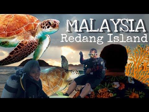 MALAYSIA, REDANG ISLAND// TURTLE BAY & DIVING