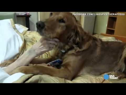 Hospice dog tenderly comforts dying patient