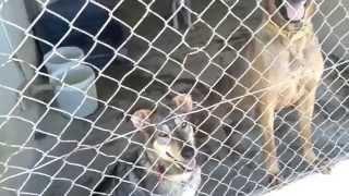Jornada de Voluntariado en la protectora Animals Sense Sostre