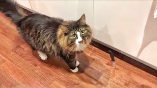 CAT GETS SCARED EASILY