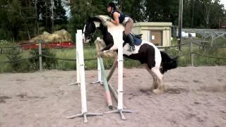 Irish cob Ian jumping 120 cm oxer