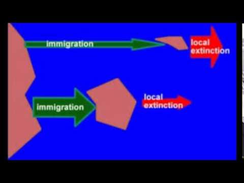 Island Biogeography - YouTube