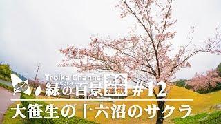 ふくしま緑の百景完全走破 #12 大笹生の十六沼のサクラ (福島)