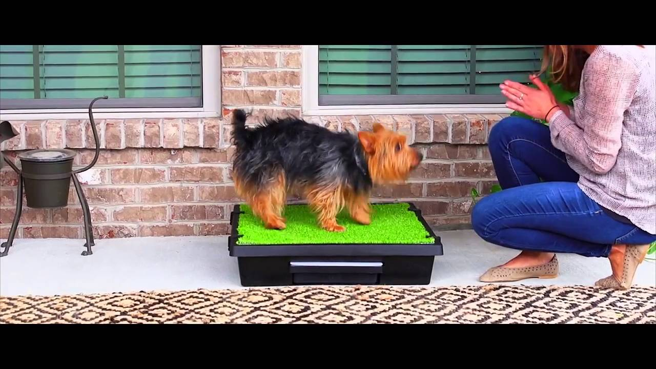 Tapete Bao Entrenador para Perros  Pet Loo PetLoo de PetSafe  YouTube