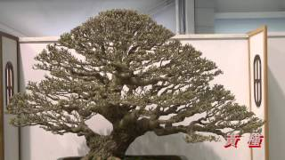 2012 Taiwan Bonsai Exhibit(4), 第17回華風盆栽精品展,羅漢松 七里香等, Full HD 1080p