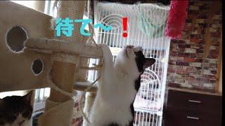 【レンガの部屋】保護猫たちと遊んでみた❗LYSTAシェルター