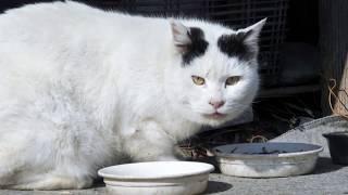 【地域猫】またもや侵入者‼憎たらしいほど悠然と煮魚を食い荒らして草むらに消えて行った。【魚くれくれ野良猫製作委員会】