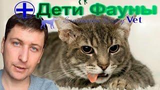 Кошку рвет. Рвота у кошки, основные причины, что делать. Советы ветеринара