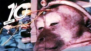 Najgorsze eksperymenty na zwierzętach!