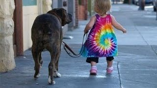 Funny Animals Videos Funny Baby and Animals Best Funny Animals Compilation 2015