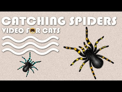 CAT GAMES - Catching Spiders! Entertainment Video for Cats and Dogs to Watch.