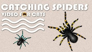 CAT GAMES - Cat¢hing Spiders! Entertainment Video for Cats and Dogs to Watch.