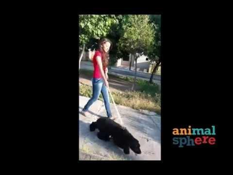 AnimalSphere - Mascotas Perdidas Y Encontradas