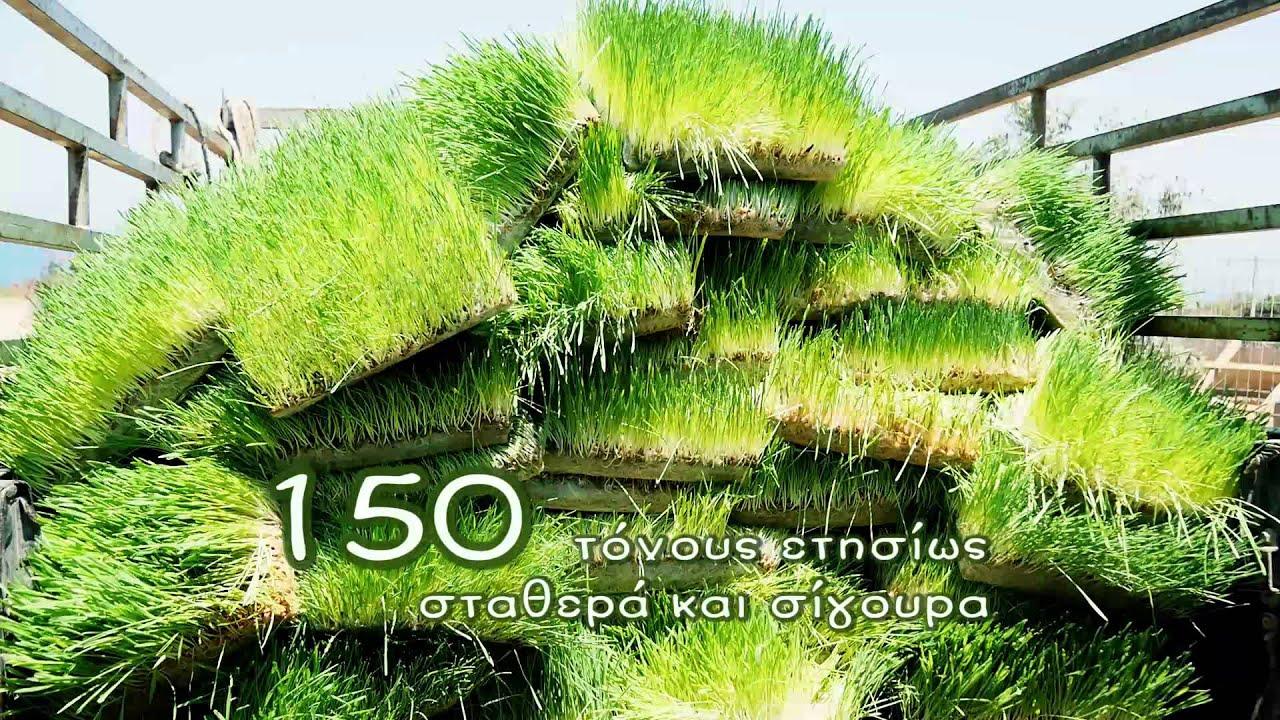 ΒΙΟΔΥΝΑΜΗ Amico - Υδροπονική Καλλιέργεια Βιολογικής Ζωοτροφής