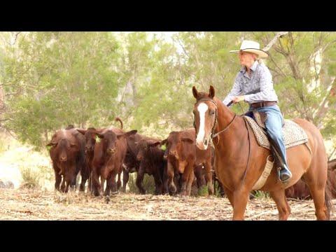 Applegate: Australian Organic Beef Farmers