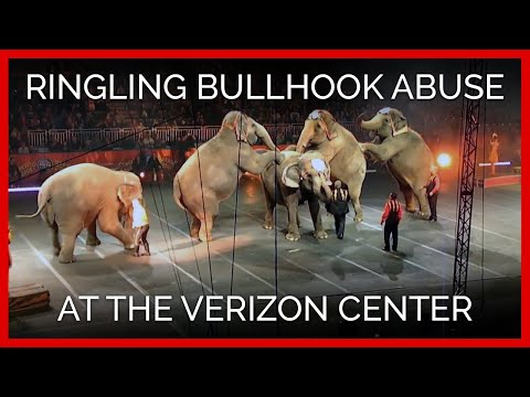 Ringling Bullhook Abuse at the Verizon Center in Manchester, N.H., September 27, 2012