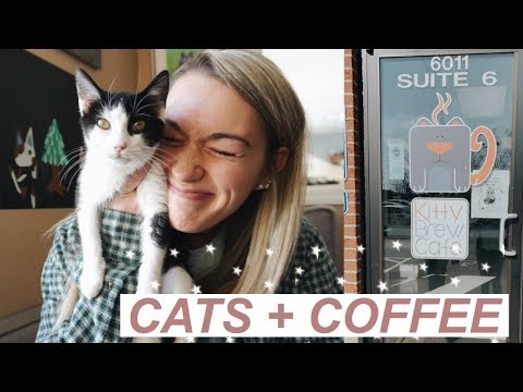 WE WENT TO A CAT CAFE!   Cats + Coffee *SO MUCH CUTENESS*