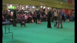 Crufts Cairn Terriers 2009 Movie