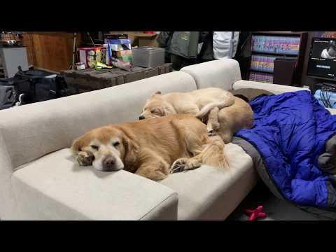 【今日の様子】折り重なって寝てる子ちゃんたち