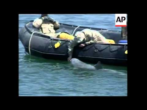 GWT: VOICED Aid distributed in Safwan, Sir Galahad docks in Umm Qasr