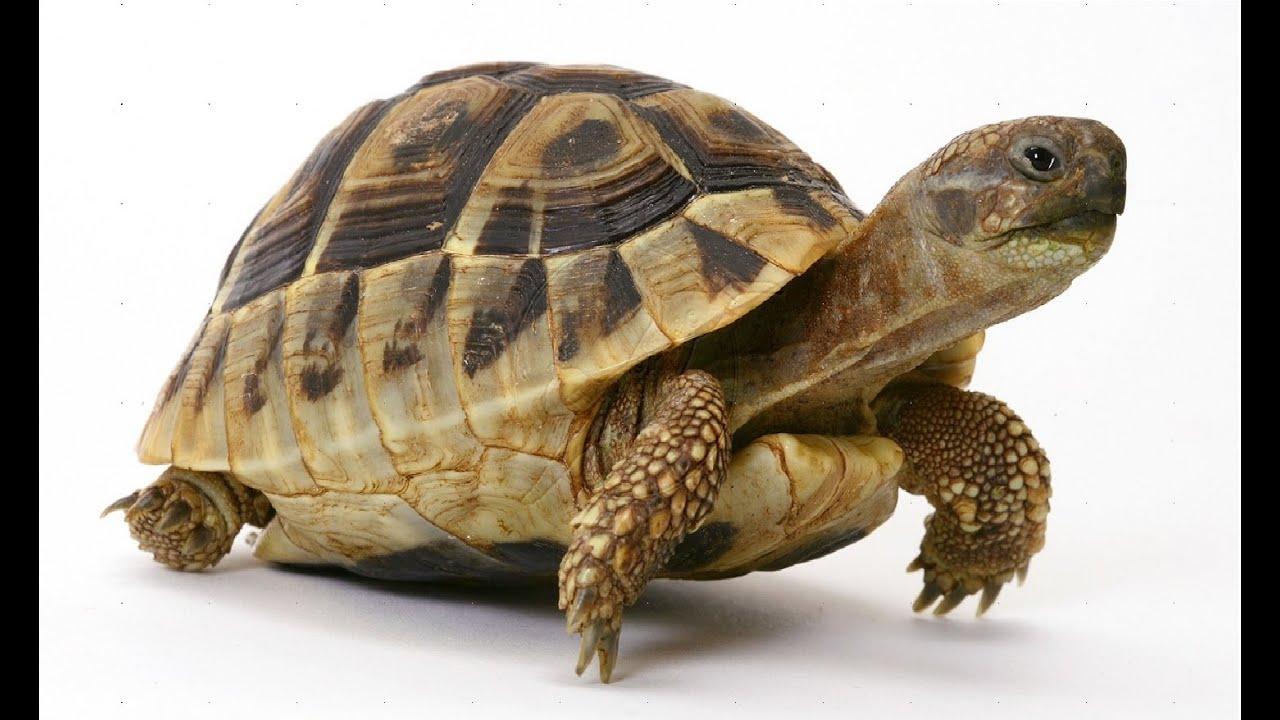 tortoise water animal gamagalaxy kids youtube