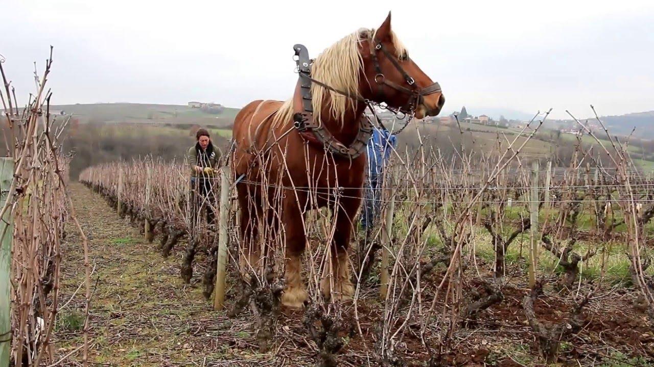 Cheval de trait et la vigne youtube - Tchoupi et le cheval ...