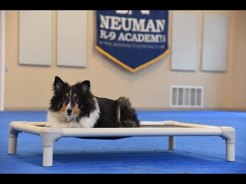Ginger (Shetland Sheepdog) Boot Camp Dog Training Video Demonstration