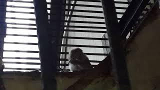 Я в зоопарке! Короткое видео про животных! Заглядывайте в описание на щёт приветов!!!