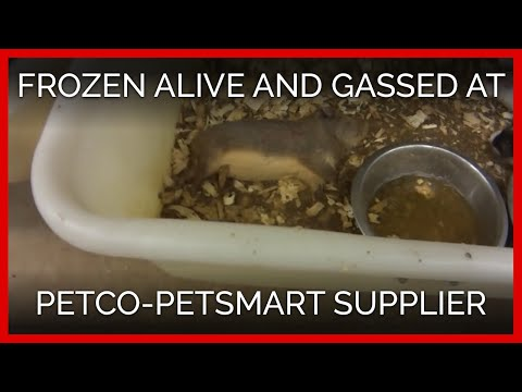 Animals Frozen Alive, Crudely Gassed at Petco, PetSmart Supplier Mill