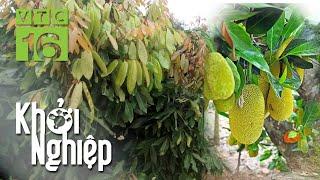 Trồng cây ăn quả kết hợp và những bài học kinh nghiệm lớn   VTC16