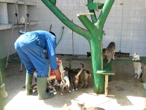 Cattery at the SPANA center in Casablanca